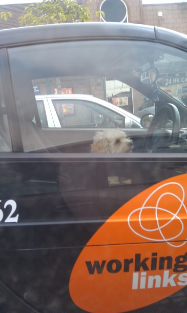 there's a dog driving that car?