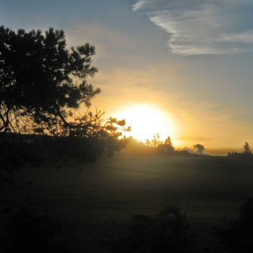 Dawn behind the trees